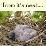 A tiny bird fell from it's nest…