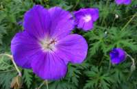 Purple Flower-900-90
