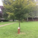 Tenterden Lions Club tree planted in the Recreation Ground