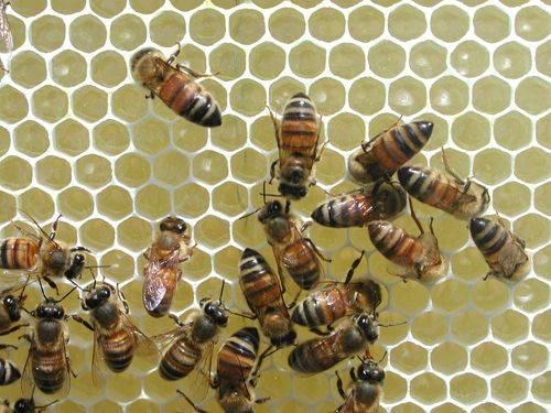 Approfondimento sulle proprietà del miele