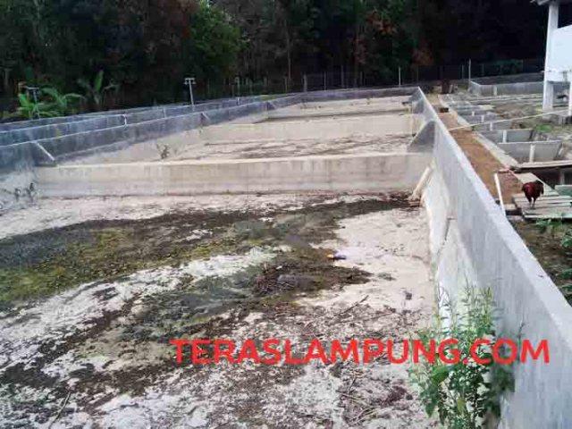 Kondisi kolam - kolam di BBI Tanjung Seneng, Lampung Utara, yang tak berfungsi akibat tak ada air.
