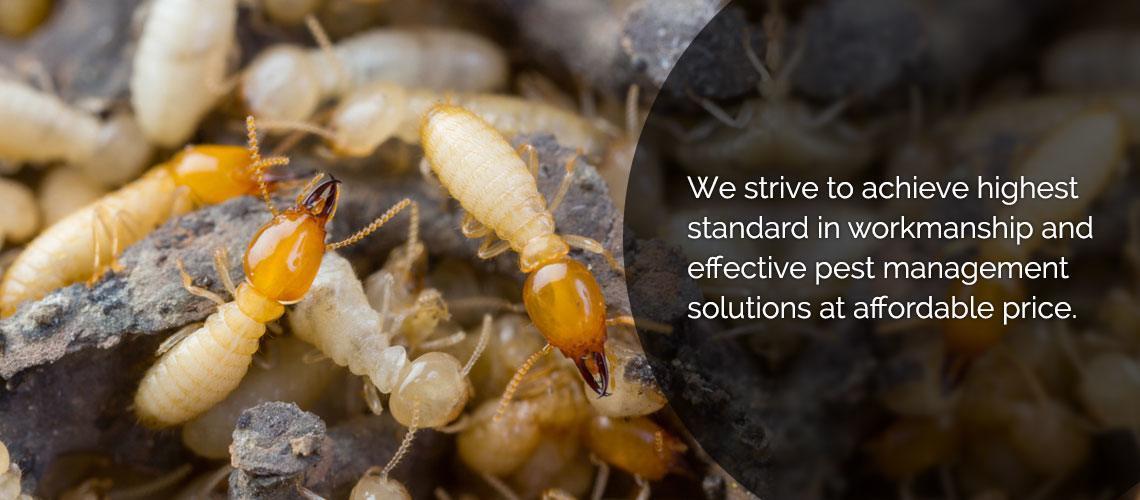 Termigon Pest Control Service
