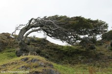 Trees grow in strange forms on the island