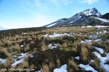 Steppe-like vegetation like coirones and yareta high on the slopes