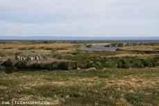 King penguin landscape