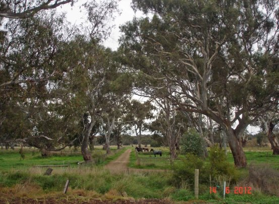 Doreen- river flats below surburbia are home to horses and the Red River Gum trees