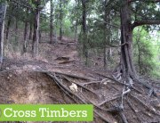 Cross-Timbers