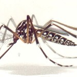 Outbreak of mosquito-borne diseases reported in South