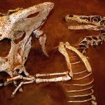 Second discovery of dinosaur bones found in Kalasin Province