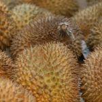 Odourless durians to hit Thai market