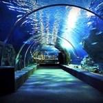 siam ocean world-featuredimage