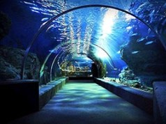siam ocean world-featuredimage