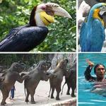 Safari Park and Marine Park in Bangkok