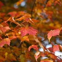 One Word Wednesday: Autumn.