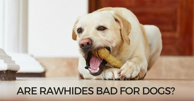 Are rawhides bad for dogs
