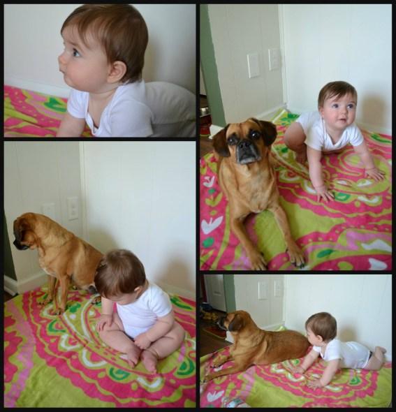 dog boy twinsies