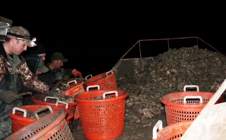 Extra NRP Officers needed to catalogue evidence of 152 bushels of oysters stolen from sanctuary