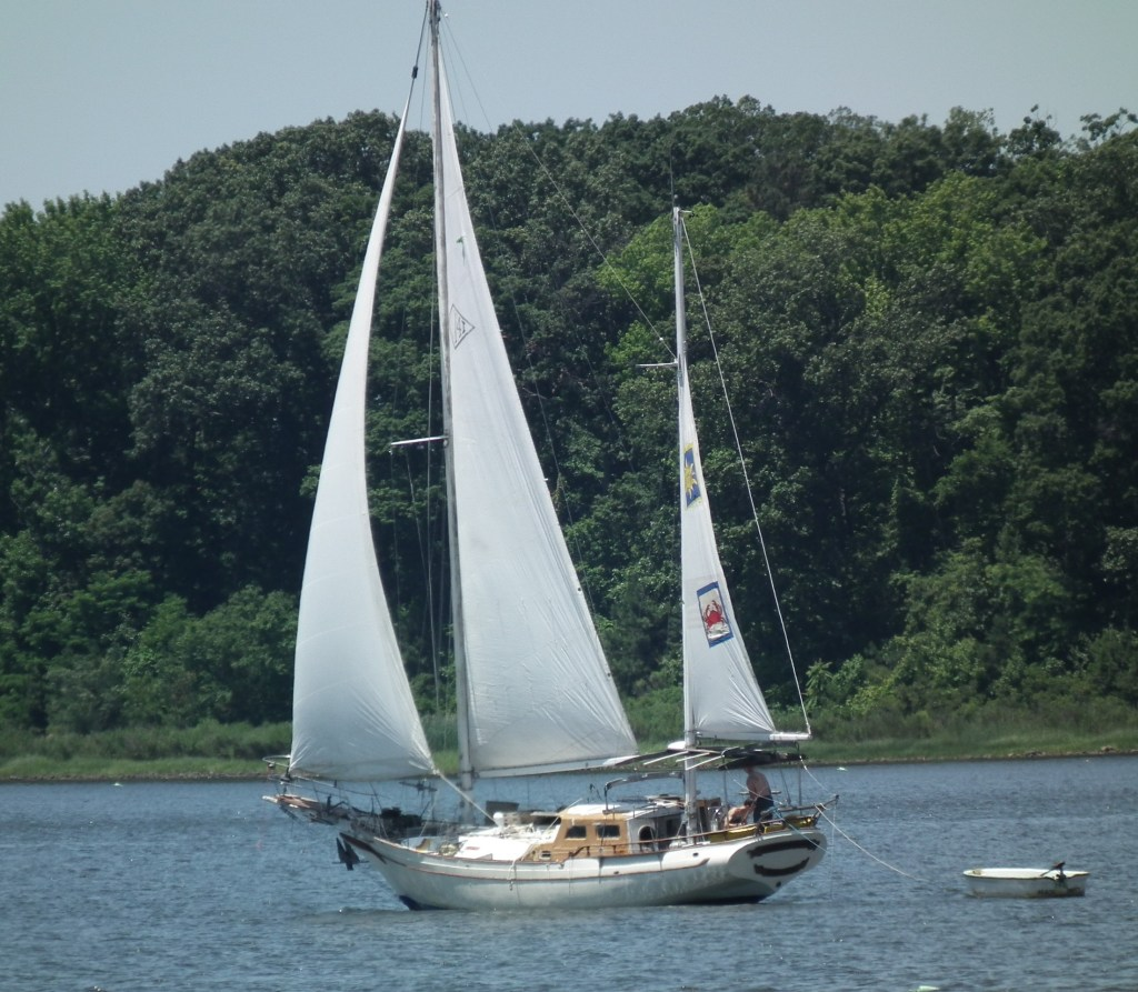 As free as the wind blows - born free to sail THE CHESAPEAKE TODAY photo