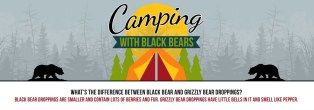 campingwithbears