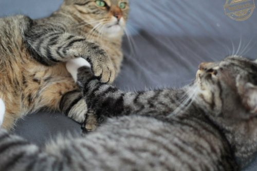 _the3cats_2014_09_07_1935