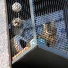 LiJaLuJi: Der Katzenbalkon [Teil 2 – Impressionen nach 3 Wochen]