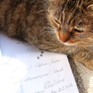 Jasper: 111 Katzen, die man kennen muss – und mich!