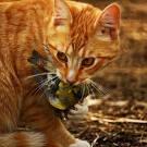 Jasper: Über Vogelgrippe, Katzen und Geflügel im Rohfutter