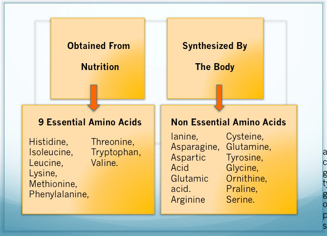 List of Amino Acids