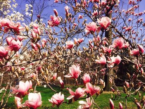 Spring Flowers in Bloom