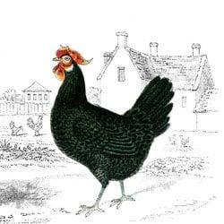feature-chicken