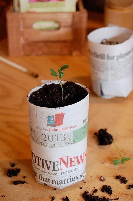 Paper Pot Seedling