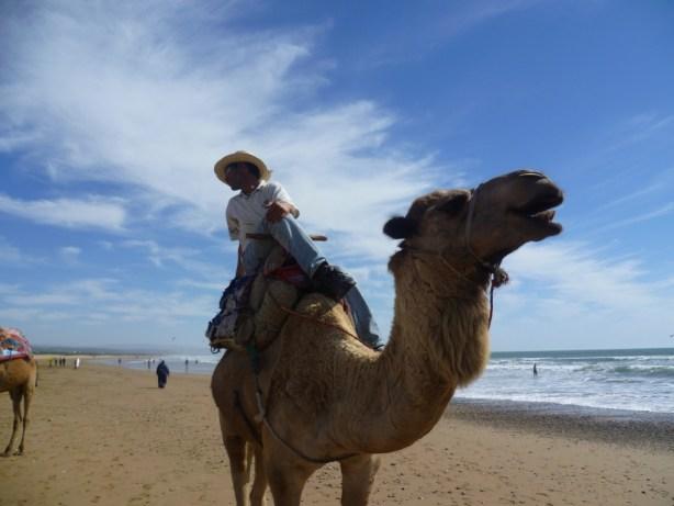 Camel beach panorama