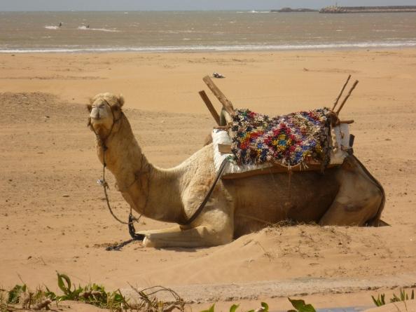 Esa-Camel