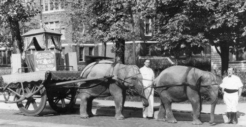 Anheuser-Busch Prohibition-era yeast wagon??