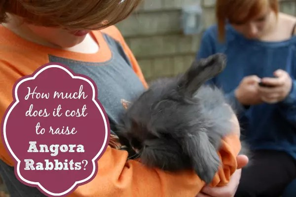 Thinking about adding Angoras to your farm? Find out how much it costs to raise Angora Rabbits