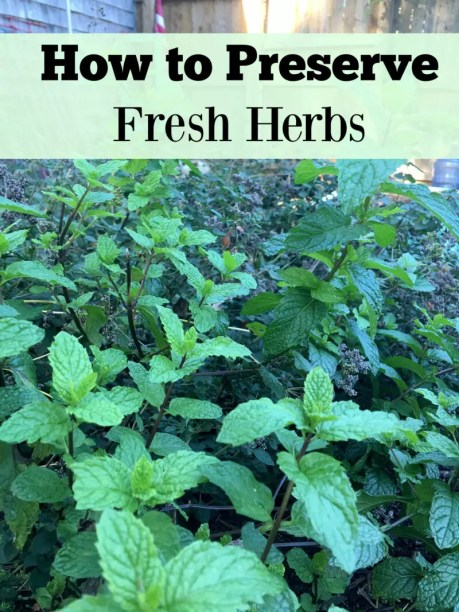 You've planted all kinds of herbs, now what do you do with them?