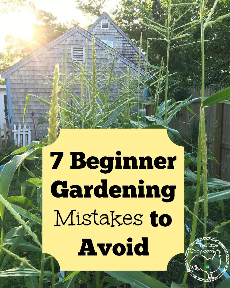 7 Beginner Gardening Mistakes to Avoid The Cape Coop