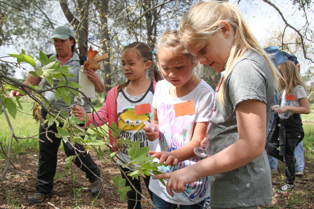 "Ambuehl Elementary School first-graders examine the leaves on the trees as part of the ""wildlife investigators"" program on The Reserve."