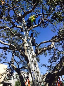 The installation of the 'Chandelier Trees' piece in Esencia features three trees with 56 lanterns. Photo: Courtesy of Rancho Mission Viejo, LLC