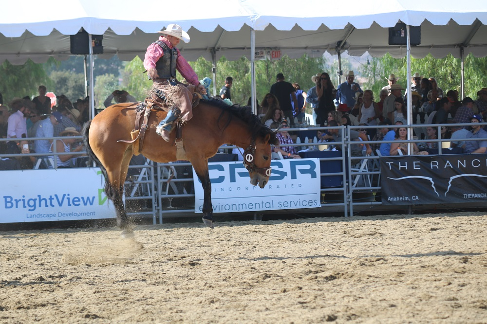 A horse jumps high into the air, trying to buck his rider at the 18th Annual Rancho Mission Viejo Rodeo. Photo: Alex Groves.
