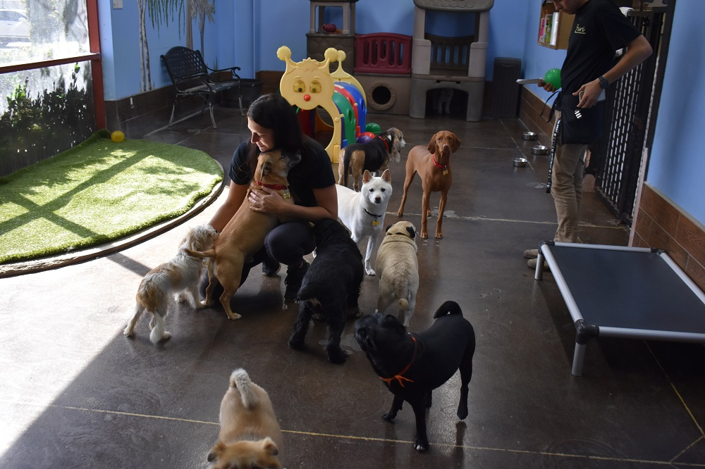 Jenn Harris interacts with dogs at the Zuri Pet Rescue on Tuesday, Oct. 16. Photo: Alex Groves