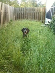 Cat's Meow Pet Sitting Dog Tall Grass