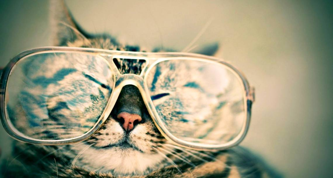 Pet Sitting Cat With Glasses Header