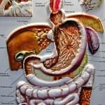 Type 2 Diabetes reversed by lowering Pancreatic fat