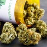 Germany To Legalize Medical Marijuana Next Year