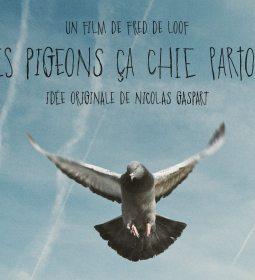 """""""Les pigeons ça chie partout"""" de Fred de Loof"""