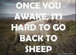 sheep- go back to sheep