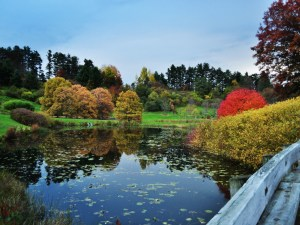 One of Cornell Plantations' scenic ponds (copyright: Oliver.Kliewe, Flickr, https://www.flickr.com/photos/53855395@N04/5399411577/sizes/l/in/photostream/)