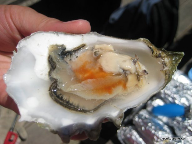 Tomales Bay Raw Oyster Hot Sauce