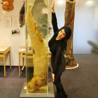 Warning! This Post Contains Penis… Iceland's Phallological Museum in Reykjavik